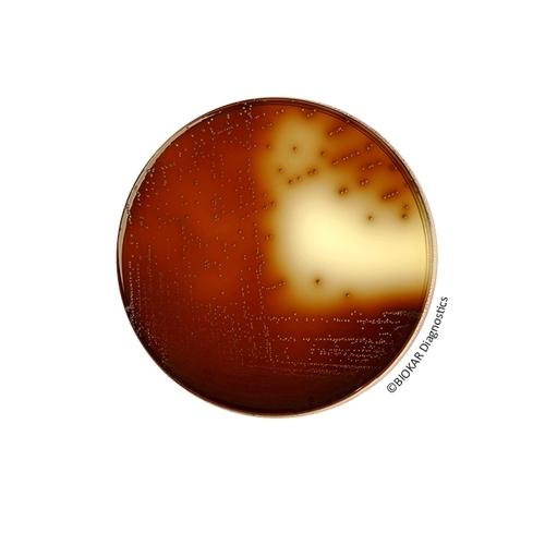 KF Streptococcus Agar (BASE)