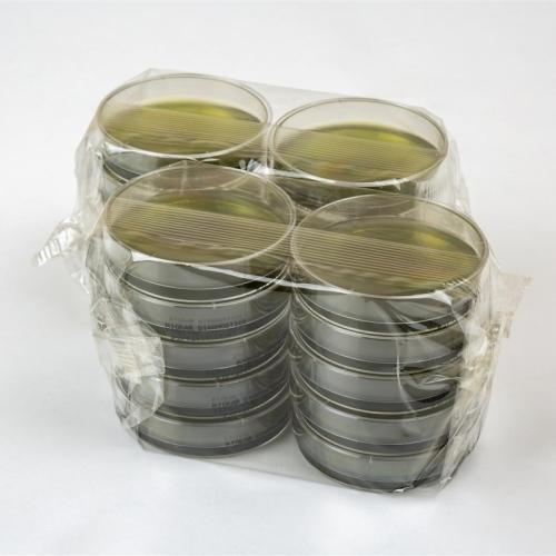 Baird-Parker Agar With Egg Yolk Tellurite
